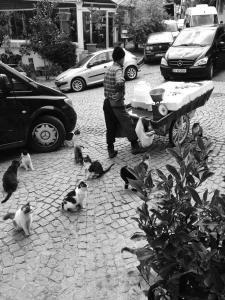 istanbul fish cart, 2014